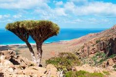 Insel von Socotra, Überblick von Homhil-Hochebene: Dragon Blood-Bäume und das Arabische Meer Lizenzfreie Stockfotos