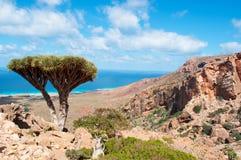 Insel von Socotra, Überblick von Homhil-Hochebene: Dragon Blood-Bäume und das Arabische Meer Lizenzfreie Stockbilder