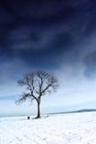 Inselbaum auf Schneefeld Stockbild
