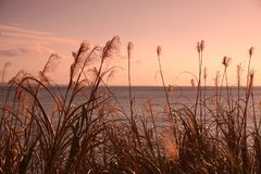 Inselleben auf Okinawa 7 lizenzfreie stockfotos