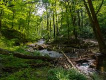Insenatura attraverso la foresta fertile, foresta dello stato di Worthington Fotografia Stock