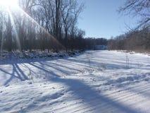 Insenatura congelata del pino su un 4 gennaio freddo in Indiana occidentale fotografia stock libera da diritti