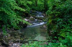 Insenatura dell'alta montagna in profondità nella foresta Fotografia Stock