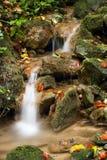 Insenatura della foresta Fotografia Stock
