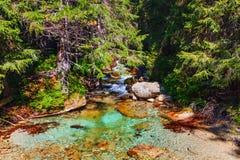 Insenatura della montagna con acqua cristallina nella foresta e nel sole che splendono attraverso gli alberi fotografia stock