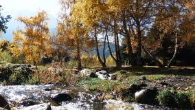 Insenatura della montagna dagli alberi di autunno archivi video