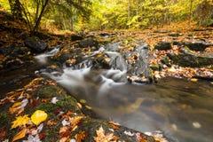Insenatura della montagna e foglie di autunno dorate Fotografia Stock