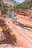Insenatura della quercia nella sosta di condizione della roccia della trasparenza Fotografia Stock