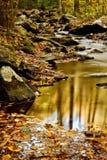 Insenatura di caduta con le rocce e gli alberi Fotografia Stock