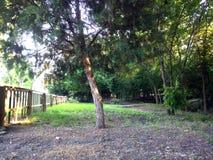 Insenatura e legno del cortile Immagine Stock