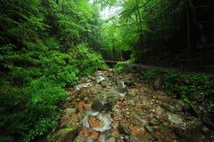 Insenatura in foresta Fotografie Stock Libere da Diritti