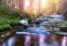 Insenatura in foresta Fotografia Stock Libera da Diritti