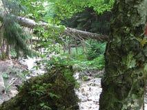 Insenatura in foresta Immagini Stock