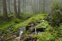 Insenatura in foresta carpatica immagine stock libera da diritti