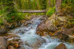 Insenatura grande Tetons della cascata Fotografie Stock