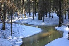 Insenatura minuscola nella foresta di inverno Fotografia Stock Libera da Diritti