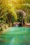 Insenatura naturale dello stagno dell'oasi in giungla di bambù tropicale in Trinidad e Tobago del nord Immagini Stock