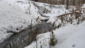 Insenatura nel legno in acqua corrente della natura di inverno, piccolo fiume nel paesaggio della neve Immagini Stock Libere da Diritti