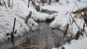 Insenatura nel legno in acqua corrente di inverno, piccolo fiume della natura nel paesaggio della neve Immagine Stock Libera da Diritti