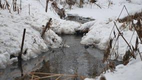 Insenatura nel legno in acqua corrente di inverno, piccolo fiume della natura nel paesaggio della neve Immagine Stock
