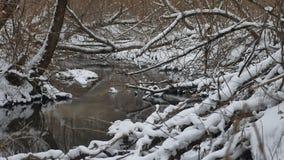 Insenatura nell'acqua corrente di inverno del paesaggio della natura di legni, piccolo fiume nella neve Immagine Stock Libera da Diritti