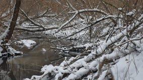 Insenatura nell'acqua corrente di inverno del paesaggio della natura di legni, piccolo fiume nella neve Immagine Stock