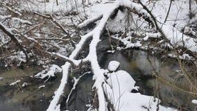 Insenatura nell'acqua corrente di inverno del paesaggio della natura di legni, piccolo fiume in neve Fotografie Stock Libere da Diritti