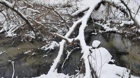 Insenatura nell'acqua corrente di inverno del paesaggio della natura di legni, piccolo fiume in neve Fotografia Stock Libera da Diritti