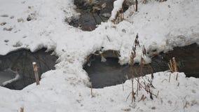 Insenatura nell'acqua corrente di inverno della natura di legni, piccolo fiume del paesaggio nella neve Fotografia Stock Libera da Diritti