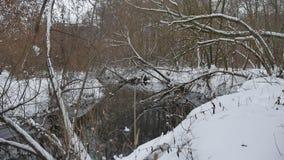 Insenatura nell'acqua scorrente del paesaggio di inverno della natura di legni, piccolo fiume nella neve Fotografia Stock