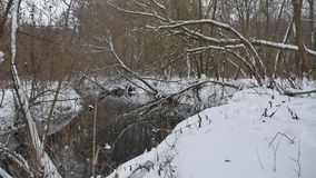 Insenatura nell'acqua scorrente del paesaggio di inverno della natura di legni, piccolo fiume nella neve Fotografia Stock Libera da Diritti