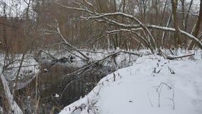 Insenatura nell'acqua scorrente del paesaggio di inverno della natura di legni, piccolo fiume nella neve Immagine Stock