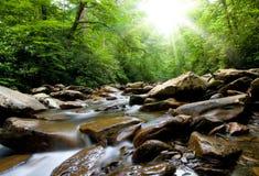 insenatura nella foresta fotografie stock libere da diritti