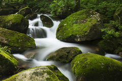 Insenatura nella foresta Fotografie Stock