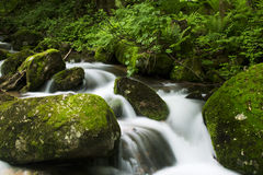 Insenatura nella foresta Immagine Stock Libera da Diritti