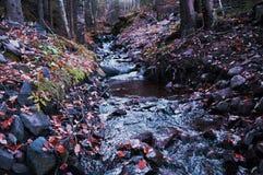 Insenatura nella foresta Immagini Stock