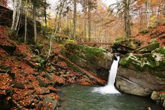 Insenatura nella foresta del faggio di autunno immagine stock libera da diritti