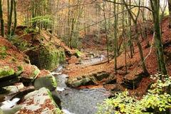 Insenatura nella foresta del faggio di autunno immagini stock libere da diritti