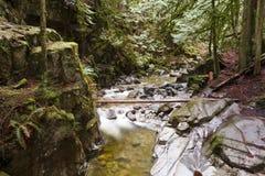 Insenatura nella foresta II Fotografie Stock