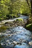 Insenatura nelle Ardenne Fotografie Stock