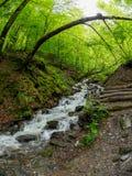Insenatura potente con una cascata precipitante a cascata nella foresta in primavera Montagne in primavera fotografie stock libere da diritti
