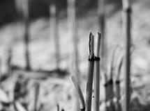 Insence Joss Stick Fotos de archivo libres de regalías