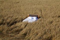 Inserisca in un concetto del campo di grano di buon sonno immagine stock libera da diritti