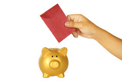 Insert Red Envelope Into Piggy Bank Royalty Free Stock Photos