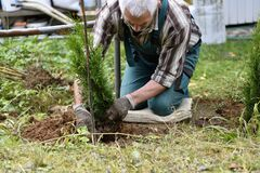 Free Inserting And Planting Trees In Holes In The Soil In The Garden Royalty Free Stock Images - 200201229