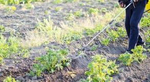 Inseticida de pulverização das folhas das batatas imagem de stock