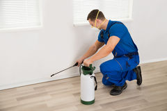 Inseticida de pulverização do trabalhador na parede em casa foto de stock