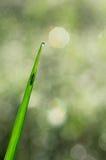 Inseto atrás da folha da grama imagem de stock