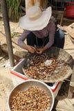 Inseto Camboja do alimento Fotos de Stock Royalty Free