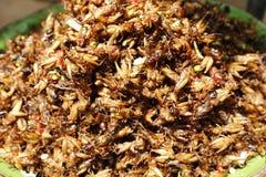 Inseto Camboja do alimento Fotos de Stock
